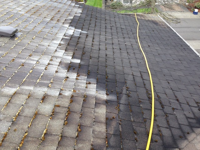 Img 0064 Peak Of Perfection Roof Cleaning