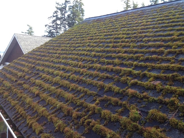 Full Service Roof Cleaning Peak Of Perfection Roof Cleaning